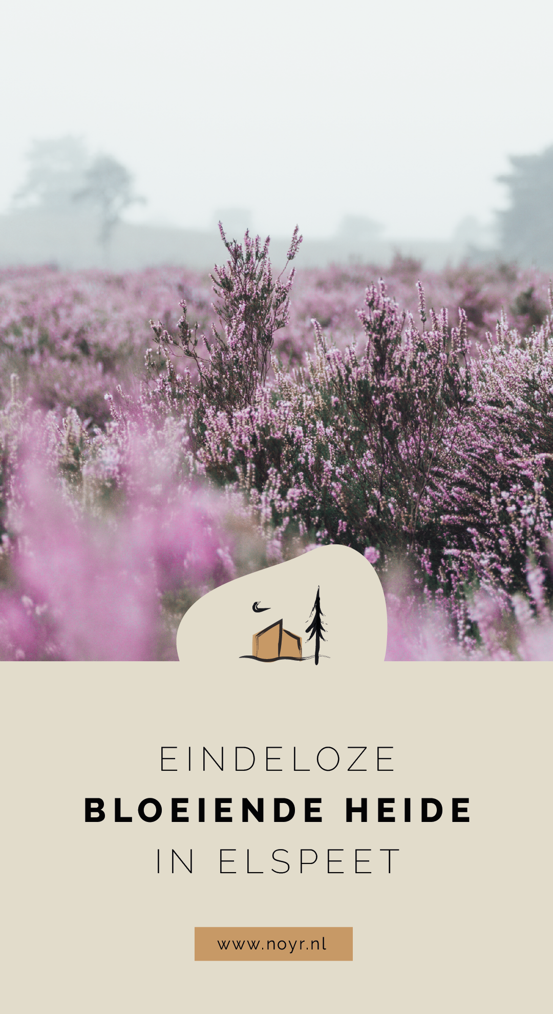 Elspeetse heide | heide in bloei | paarse heide | Veluwe | Pinterest