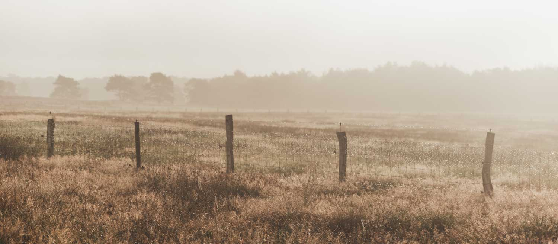 Elspeetse Heide | zonsopgang | heide in bloei | paarse heide | Veluwe
