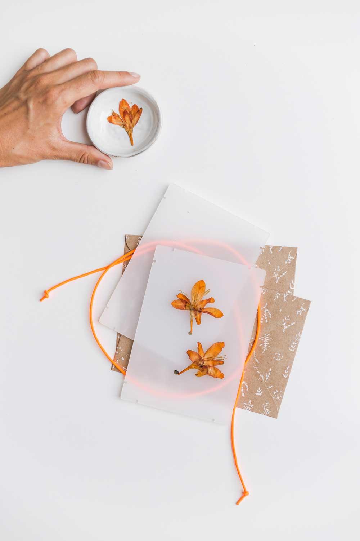 Zelf bloemen drogen | Bloemenpers | Flowerpress | Bloempers | Studio Carmela Bogman | maison KOOS