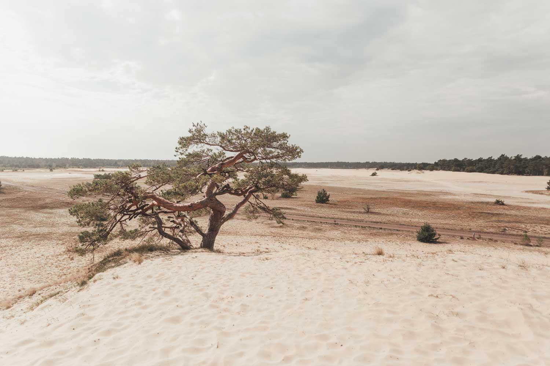 Hulshorster Zand | Hulshorst | Zandverstuiving | Veluwe