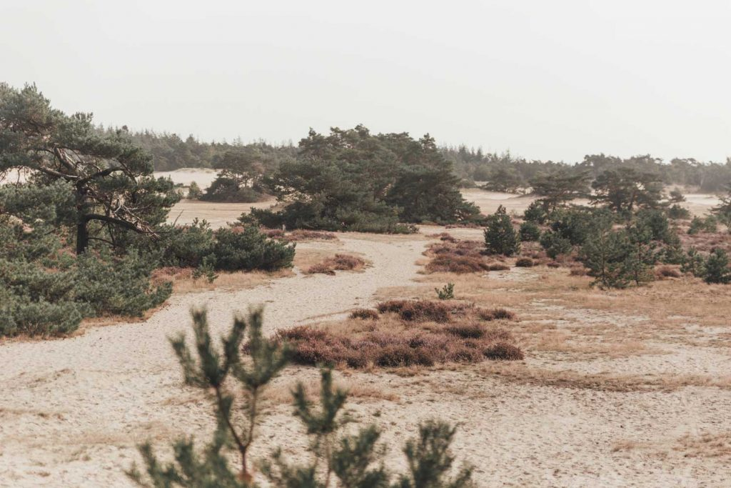 Zandverstuiving | Veluwe | Hulshorst | Hulshorster Zand